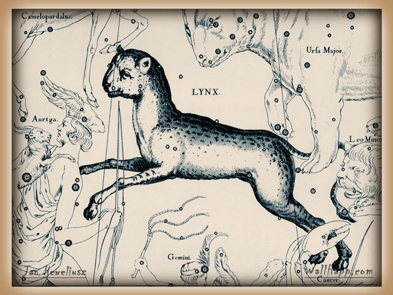 hevel-constellation-lynx-auriga