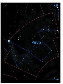 Павлин